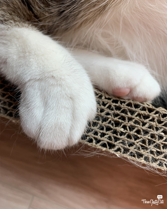 cat's back paws