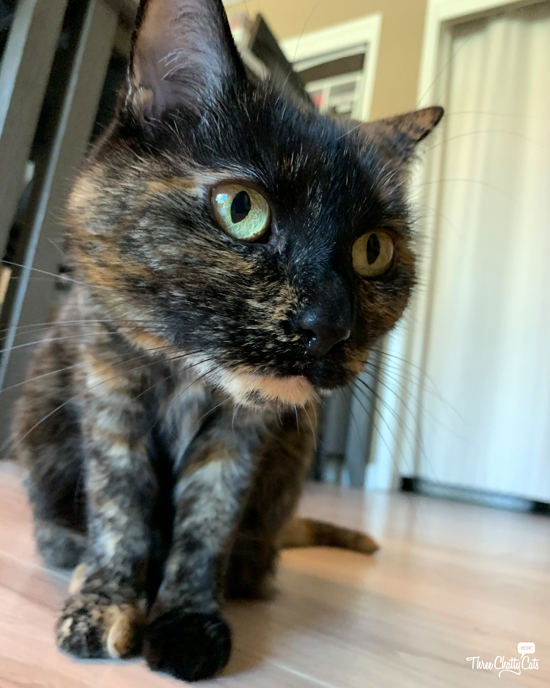 tortie cat with green eyes