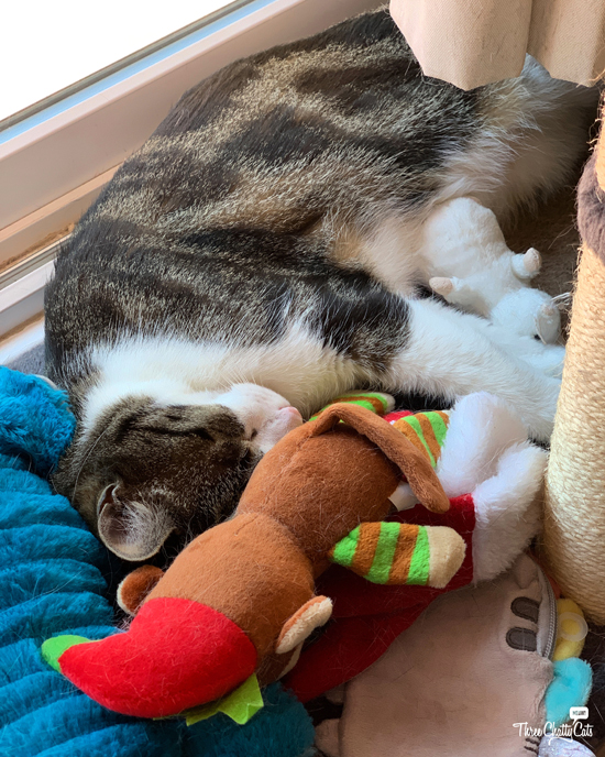 tabby cat napping with his toys