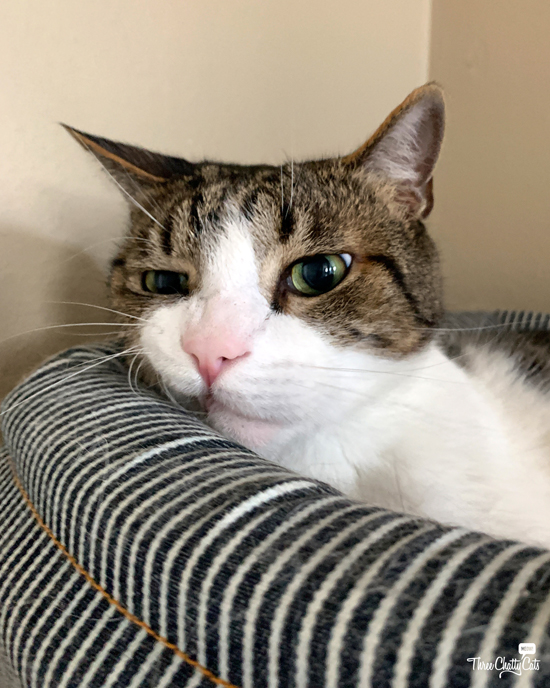 tabby cat with funny face