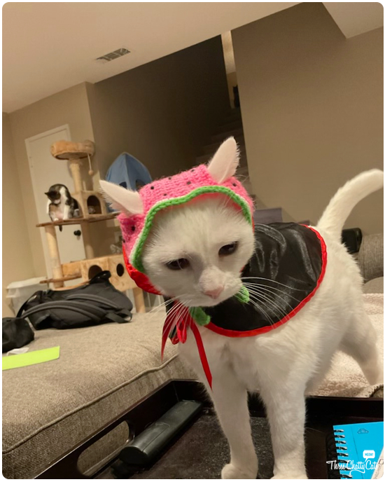blooper photo of white cat in strawberry hat and vampire cape