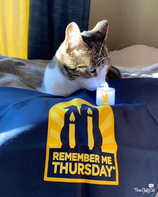tabby cat and Remember Me Thursday