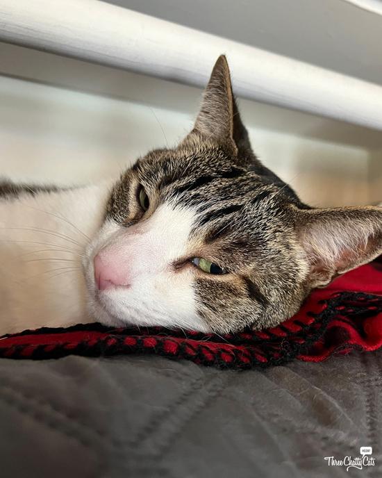 tabby cat giving side eye