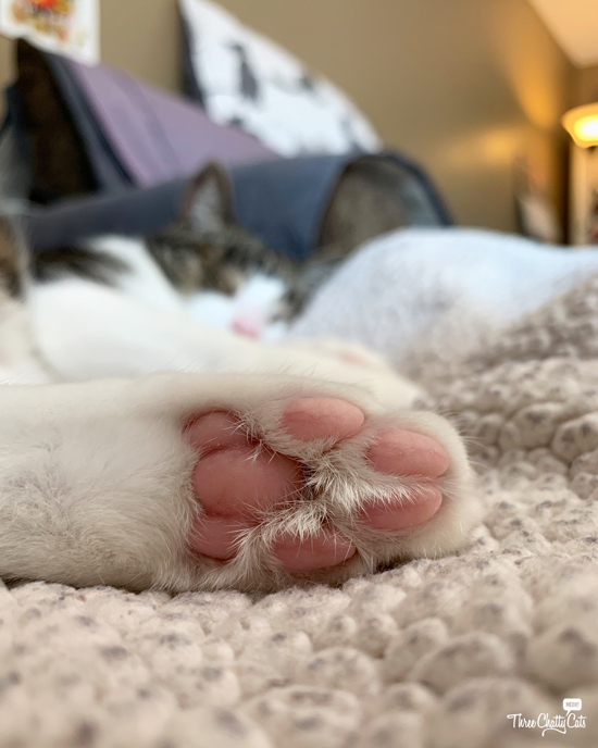 tabby cat's pink toe beans